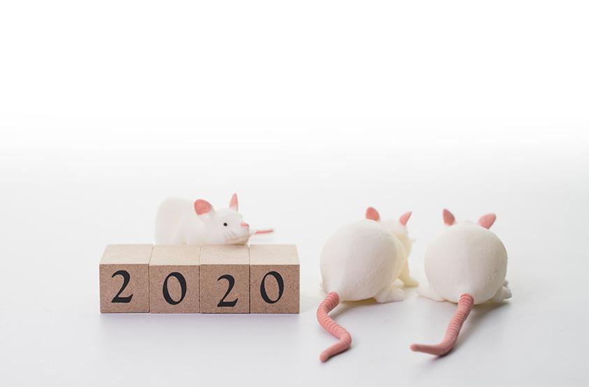 2020年は子年!全国各地のねずみと一緒に年賀状にぴったりな写真